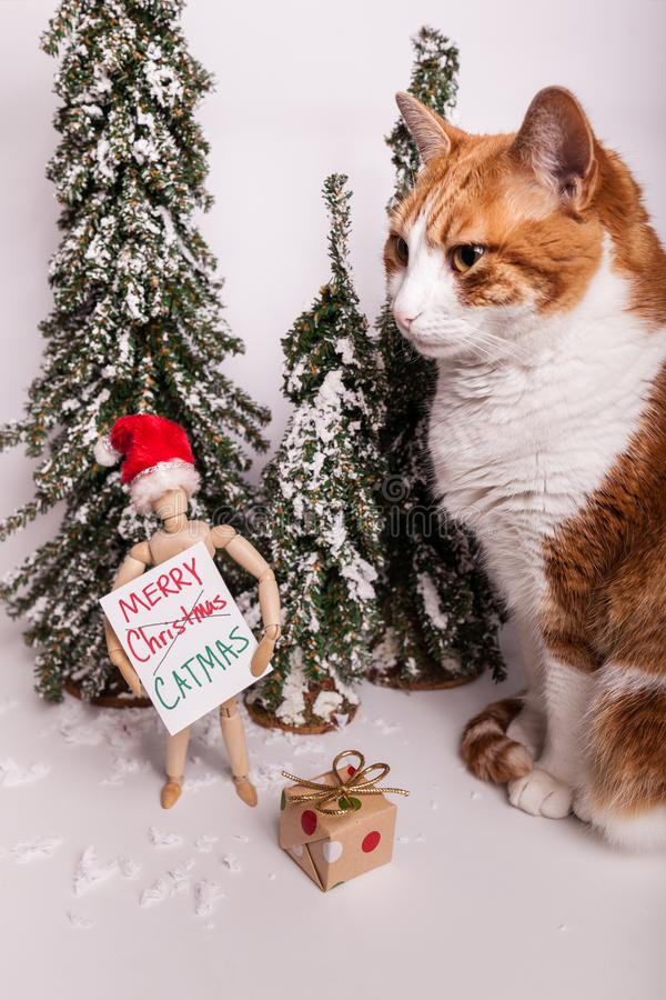Christmas scene kitty cat sitting by wooden manikin doll holding a sign Merry CATMAS wearing a Santa Claus red hat stock images