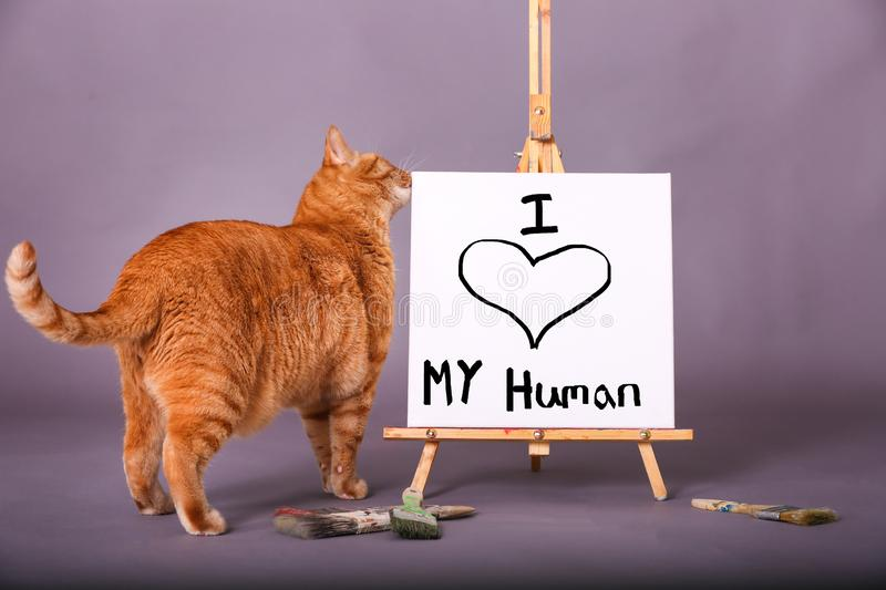 Orange tabby cat standing by sign with I love my human painted on canvas stock images