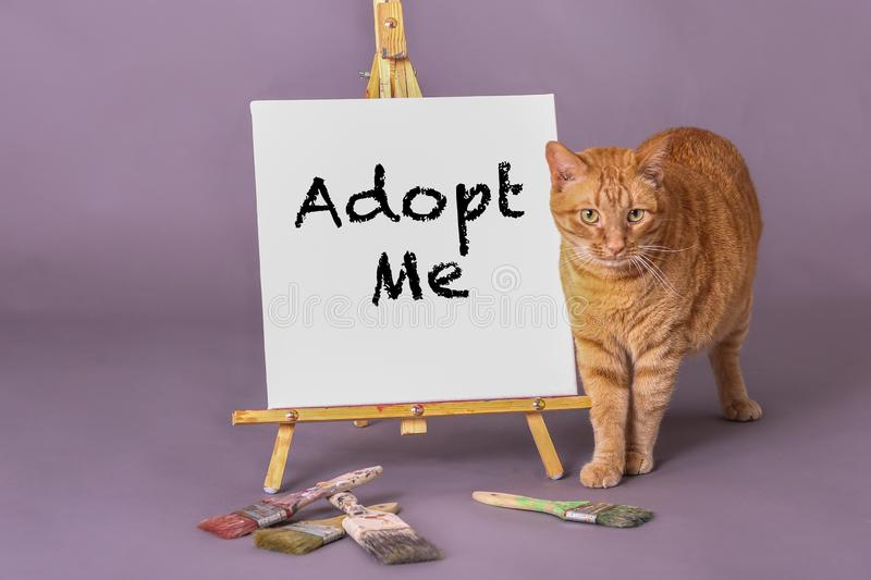 Cute orange tabby cat standing by sign with Adopt Me painted on sign royalty free stock image