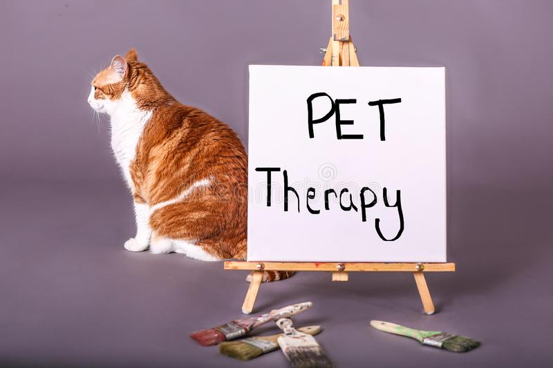 Pet Therapy sign on painters easel with demestic house cat sitting behind sign royalty free stock images