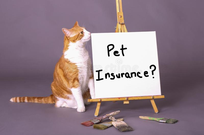 Domestic house cat standing by white sign with pet insurance royalty free stock photography