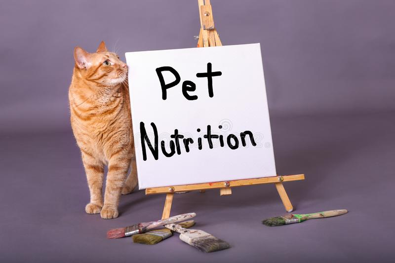 Pet Nutrition sign painted on white canvas orange tabby cat standing by sign royalty free stock images