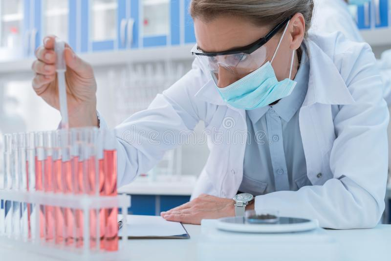 Scientist making experiment. Professional scientist in sterile mask and protective glasses, making experiment with samples in chemical lab royalty free stock photo