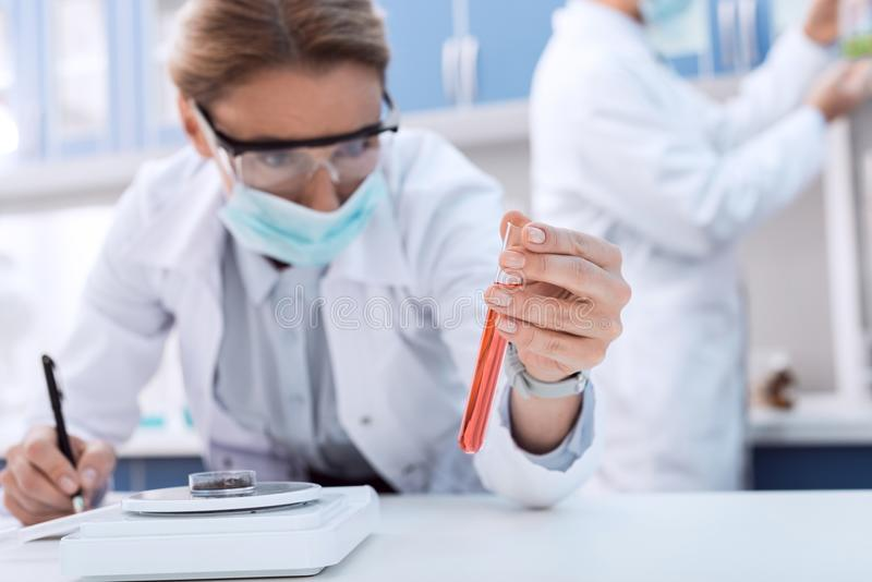Scientist making experiment. Professional scientist in white coat examining test tube while making experiment in chemical lab stock photos