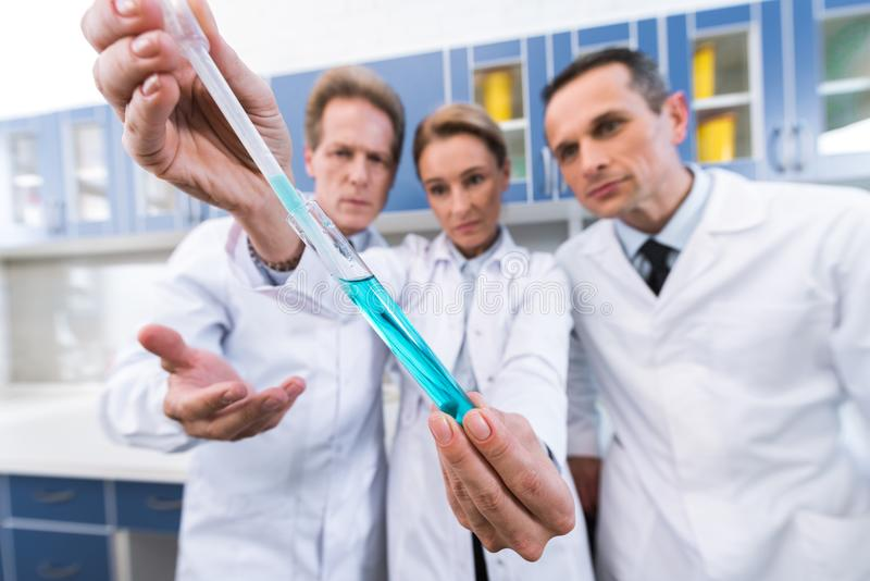 Scientists making experiment. Professional scientists in white coats looking at test tube while making experiment in chemical lab royalty free stock image