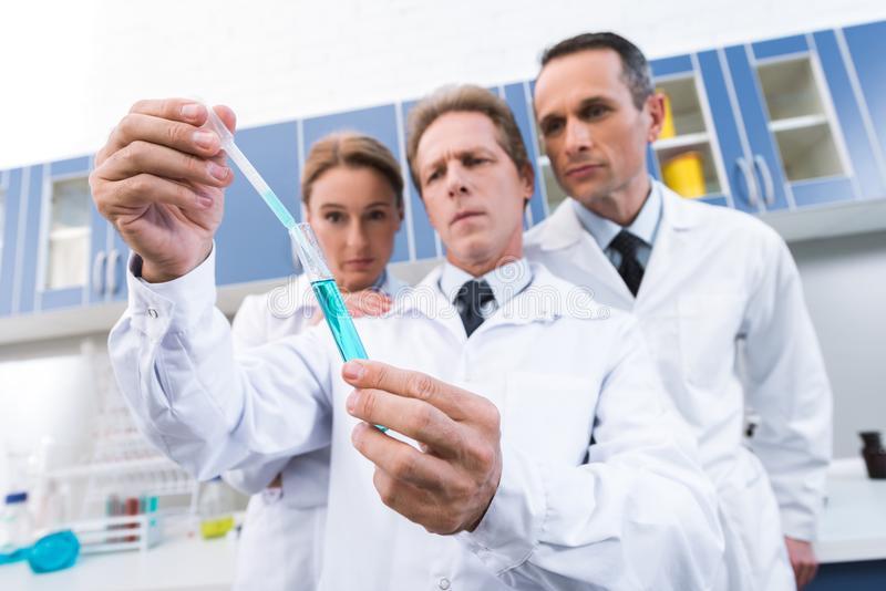 Scientists making experiment. Professional scientists in white coats looking at test tube while making experiment in chemical lab stock images