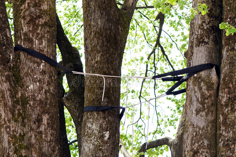 Professional tree cabling and bracing stock image