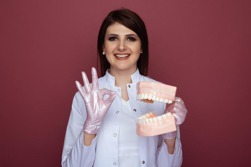 Professional woman dentist holding in hands jaw isolated in the pink studio. royalty free stock image