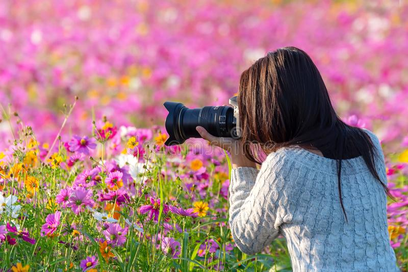 Professional woman photographer taking camera outdoor portraits with prime lens in the photography flower cosmos meadow nature. Travel and Lifestyle Concept royalty free stock photography