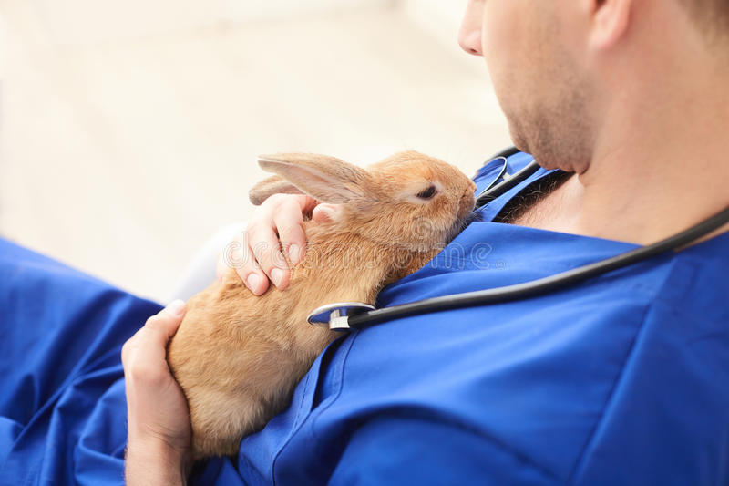 Professional young veterinarian is curing sick animal. Skillful male vet is trying to cure the ill rabbit. He is holding pet and stroking it with sympathy stock images