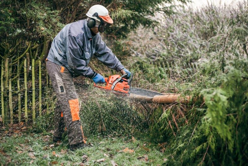 Professionele tuinman die kettingzaag met behulp van stock afbeelding