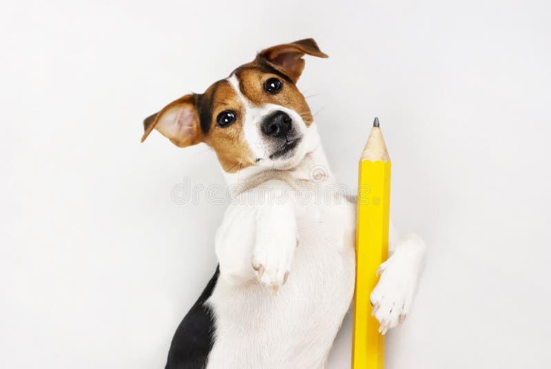 Professor do cão imagem de stock