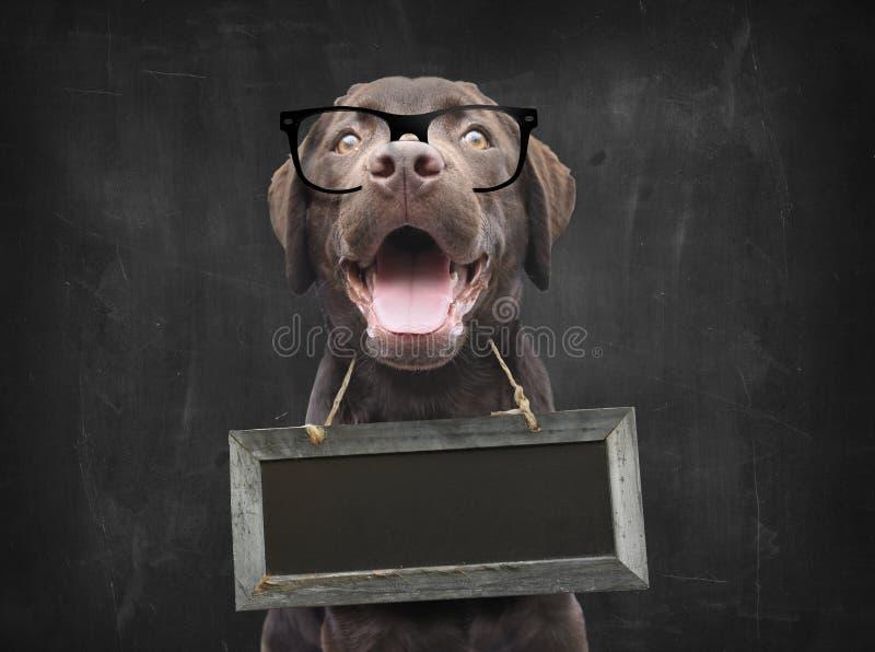 Professor do cão com vidros do lerdo contra o quadro-negro com placa vazia do sinal como o colar em torno de seu pescoço com espa fotografia de stock
