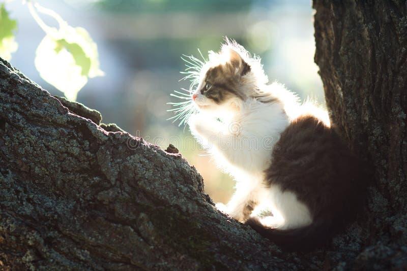 Profiel van een klein katje in aard in de zon op een boom royalty-vrije stock foto