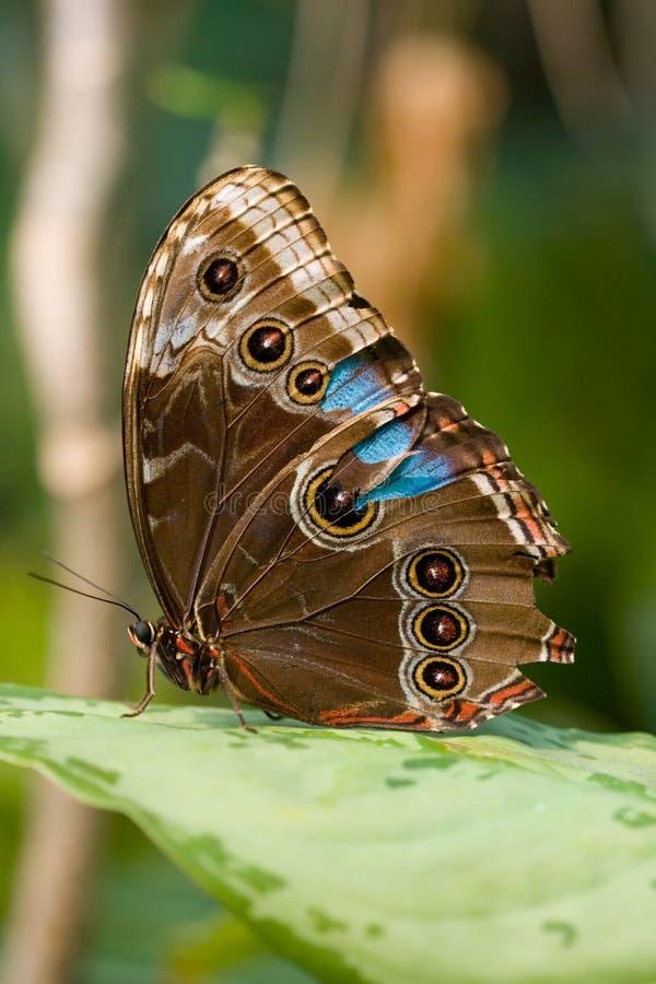 Profiel van een vlinder stock foto