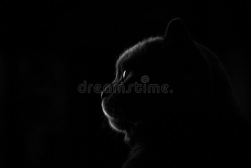 Profiel van kat Mooie verlichting royalty-vrije stock afbeelding