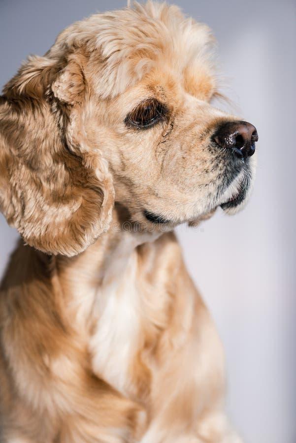 Profiel van zeer leuk hondhuisdier binnen stock afbeelding