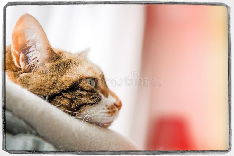 Profielmening van leuke kat met grappig gezicht royalty-vrije stock afbeelding