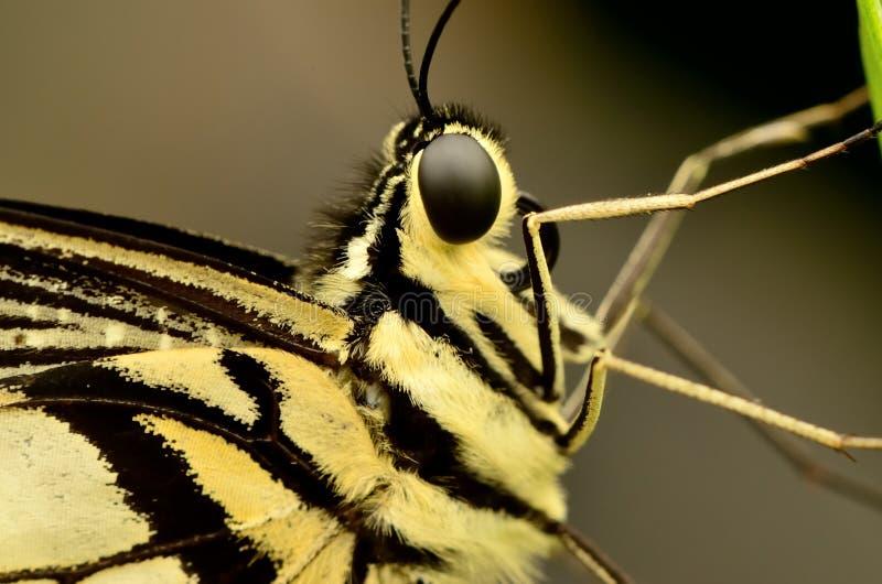Profil av en fjäril på ett blad arkivbild