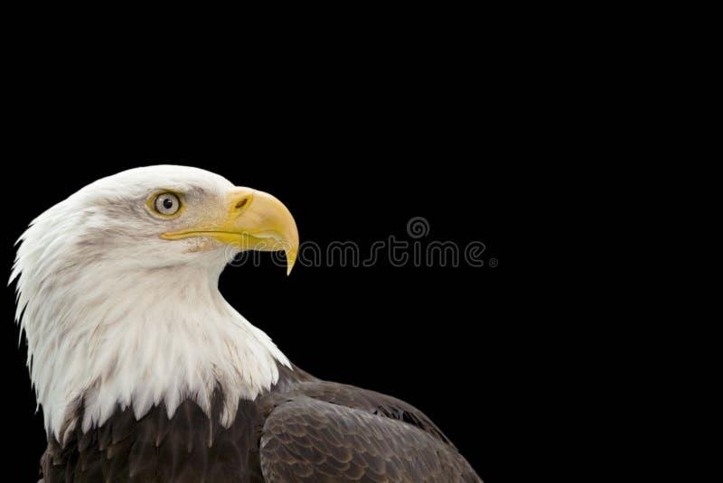 Profil d'aigle sur le noir images stock