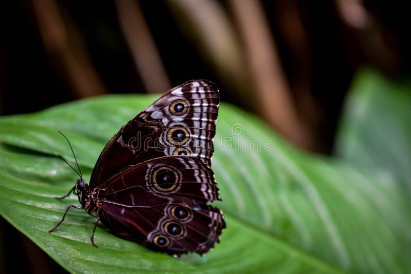 Profil d'un papillon image libre de droits