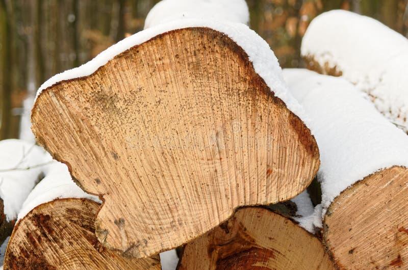Profil d'un tronc d'arbre en hiver photo stock