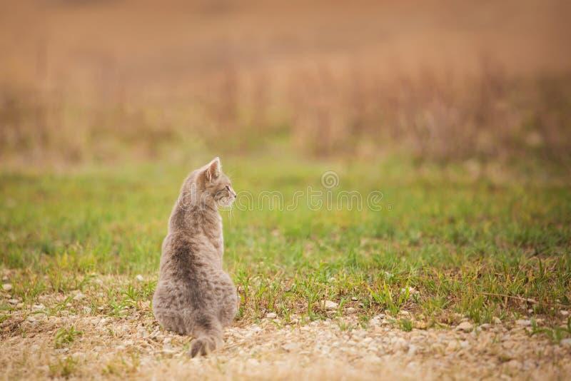 Profil de chat de ferme images libres de droits