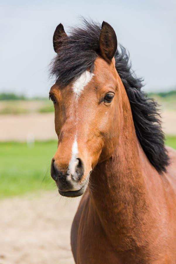 Profil de portrait de pousse de tête de cheval de Brown photos libres de droits