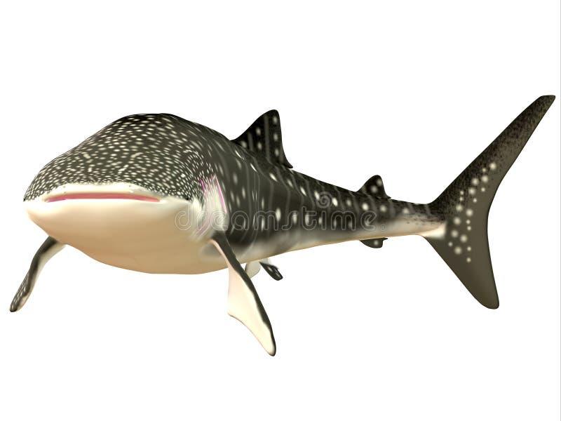 Profil de requin de baleine image libre de droits