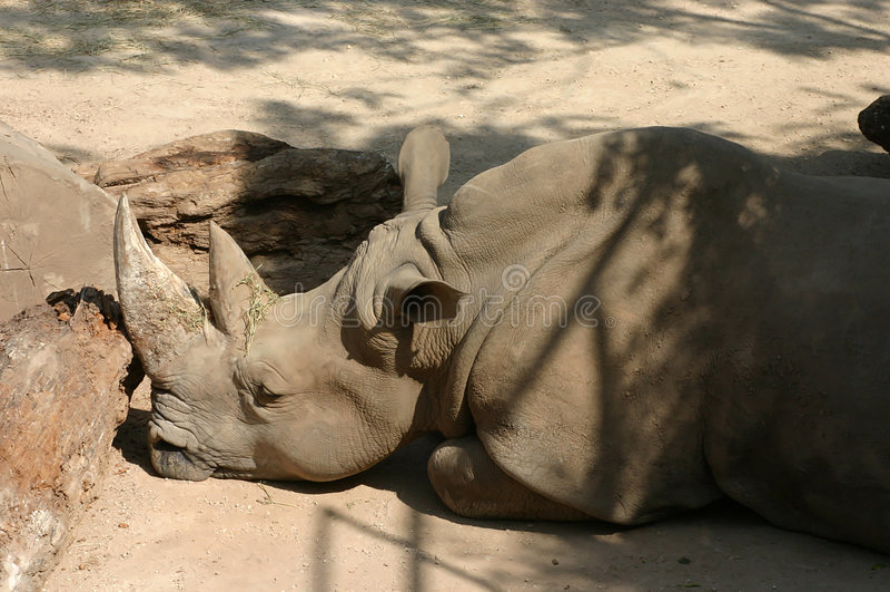 Profil de rhinocéros photographie stock