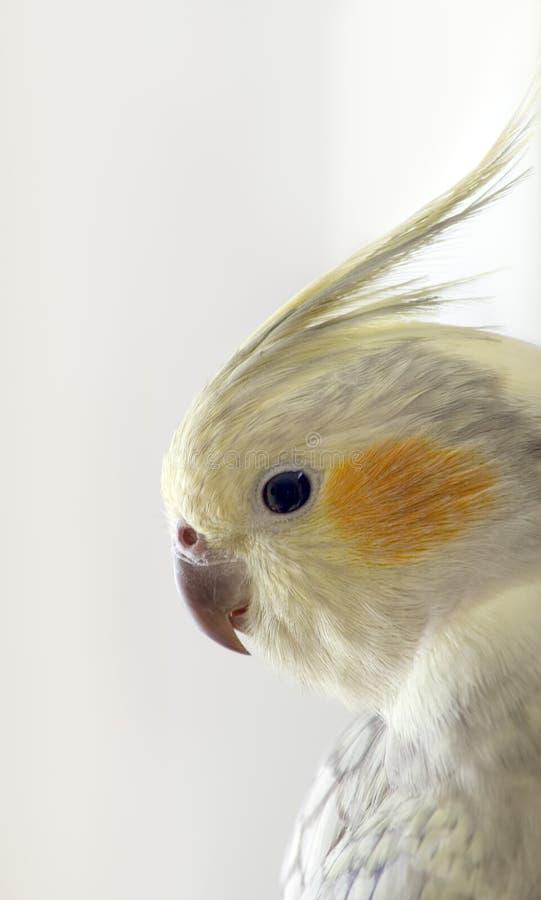 Profil des exotischen Vogels lizenzfreies stockbild