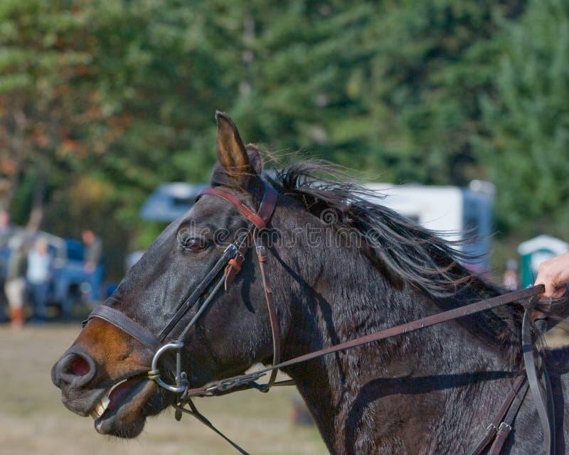 Profil des springenden Pferds des Erscheinens stockbild