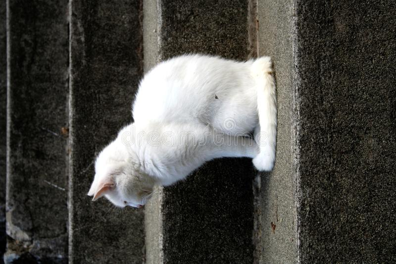 Profil du chat blanc images libres de droits