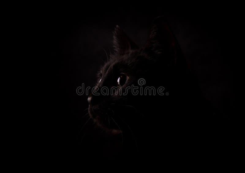 Profil einer mysteriösen schwarzen Katze gegen dunklen Hintergrund stockbild