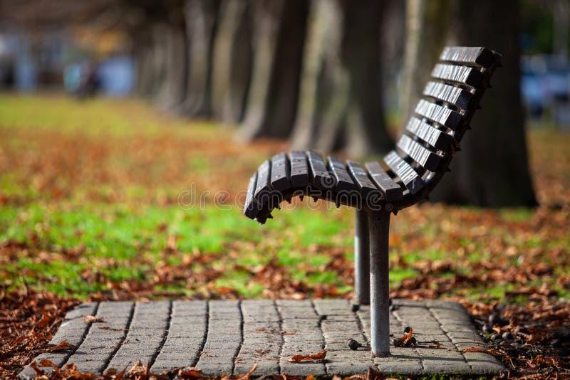 Profil för ett enda säte i träbänk Shallow DOF royaltyfria foton