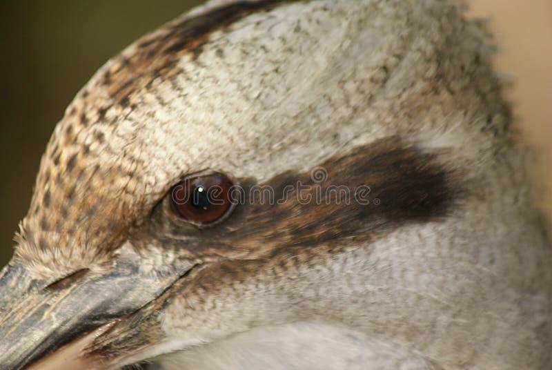 Profil latéral de martin-chasseur photo libre de droits