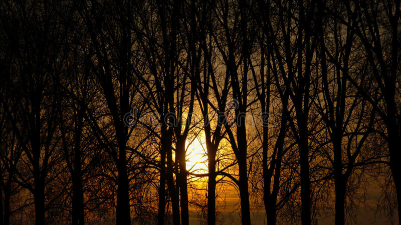 Profile of bare trees against sunset. Silhouettes of bare winter trees against golden sunset royalty free stock photo