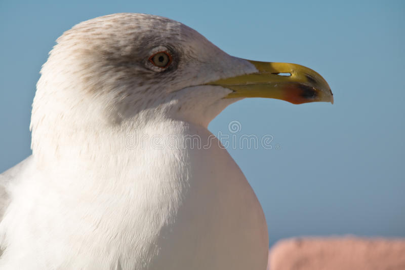 Profile beautiful cute seagull in sunny blue sky stock photos
