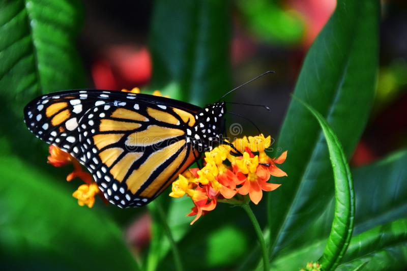 Profile of butterfly on flower royalty free stock image