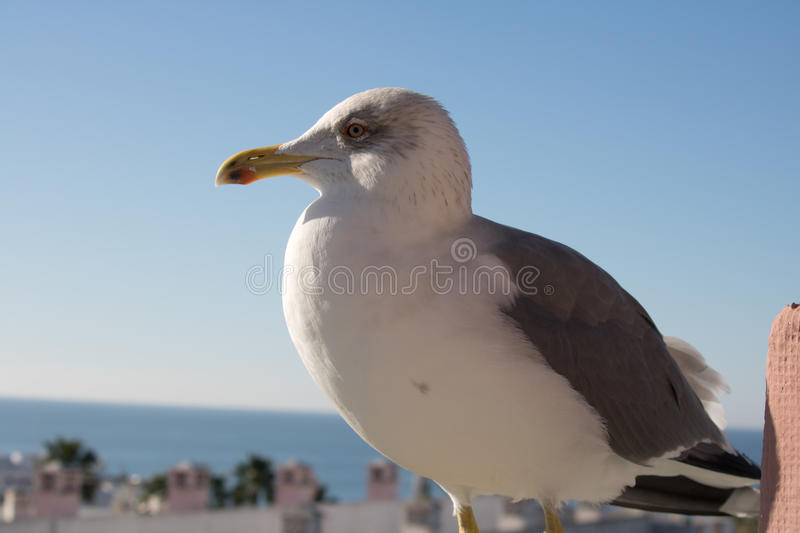 Profile head of cute seagull in sunny blue sky stock images