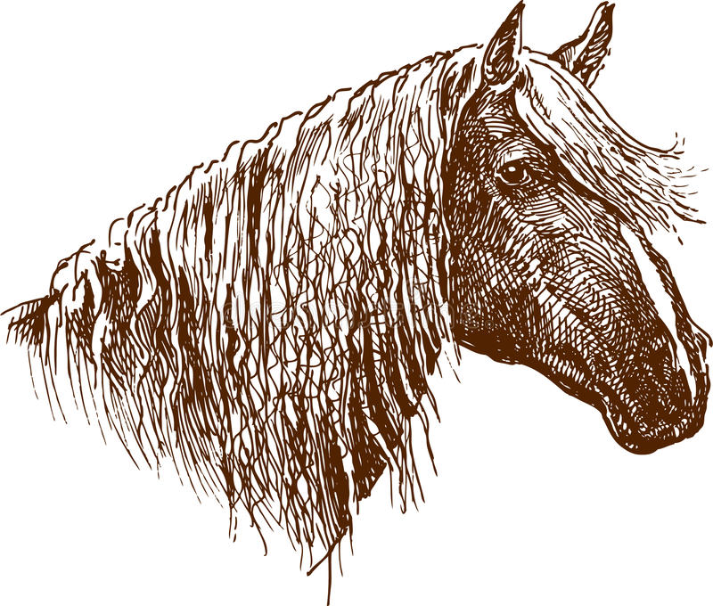 Profile Of A Horse Royalty Free Stock Photo