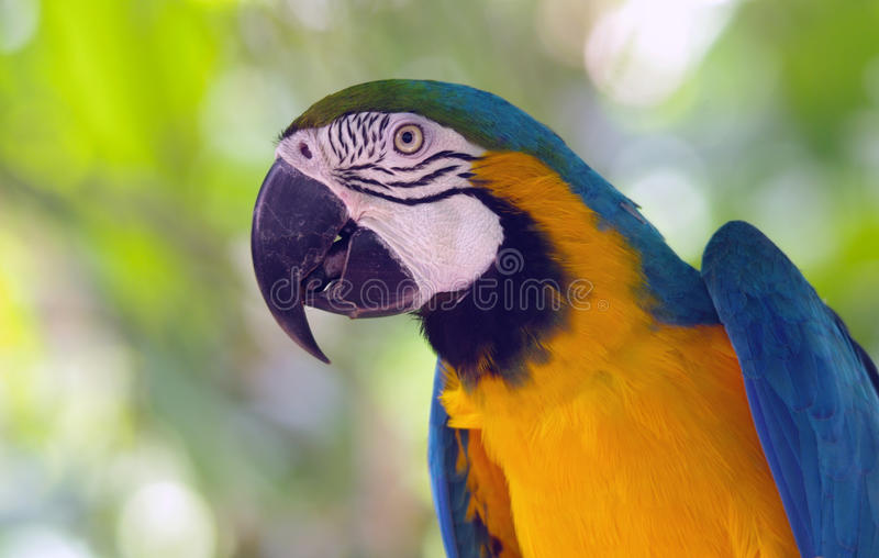 Profile of a macaw parrot royalty free stock photos