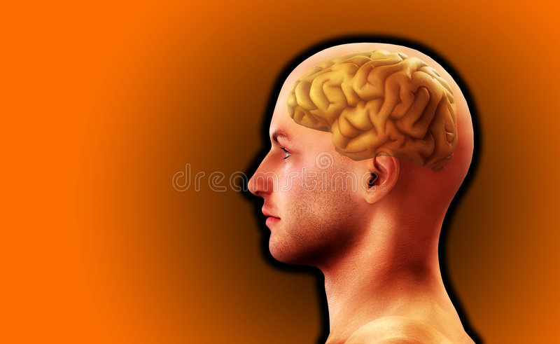 Profile Of Man With Brain 8