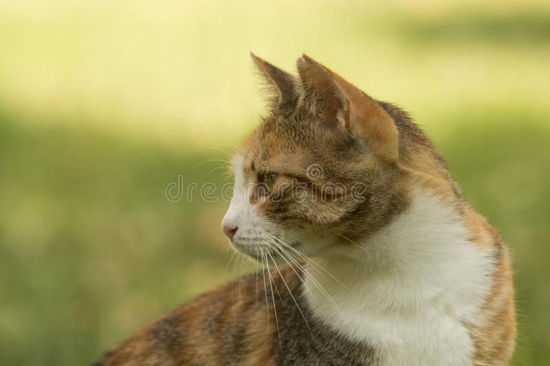 Profile of a nice stray calico cat with short fur looking back stock image