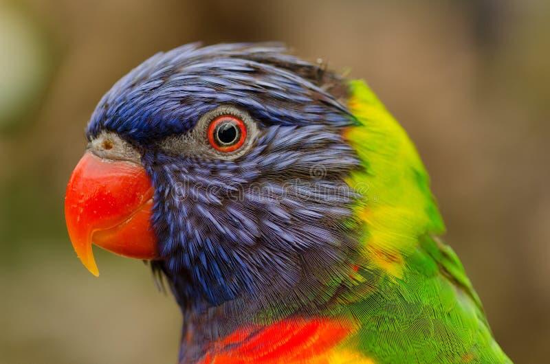 Profile Portrait Of Parrot Free Public Domain Cc0 Image