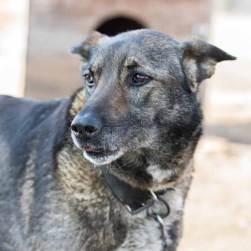 Profile portrait of a smart domestic dog. The dog carefully looks away stock photo