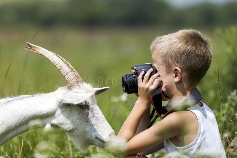 Profile portrait of young blond cute handsome child boy taking picture of funny curious goat looking straight in camera on bright stock photo