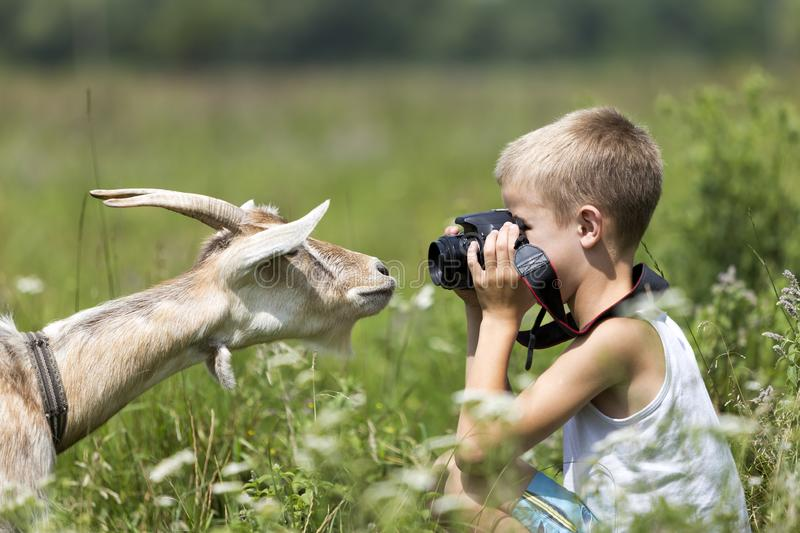 Profile portrait of young blond cute handsome child boy taking picture of funny curious goat looking straight in camera on bright royalty free stock image