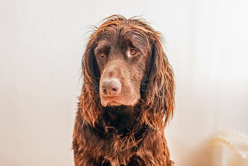Profile of wet dog stock photo