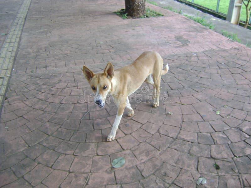 Profilfoto des Hundegehenden B?rgersteigs stockfotografie